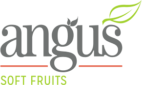 Angus Soft Fruits+Image